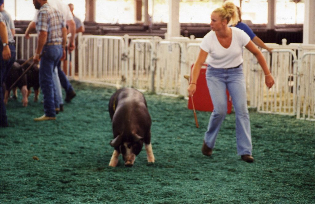 Q Pigs A
