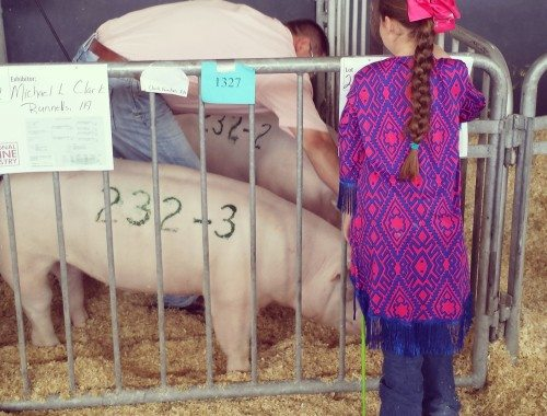 Pig Show Prep