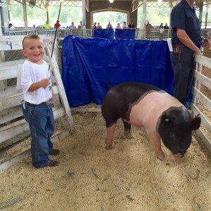 SummerShowPigs